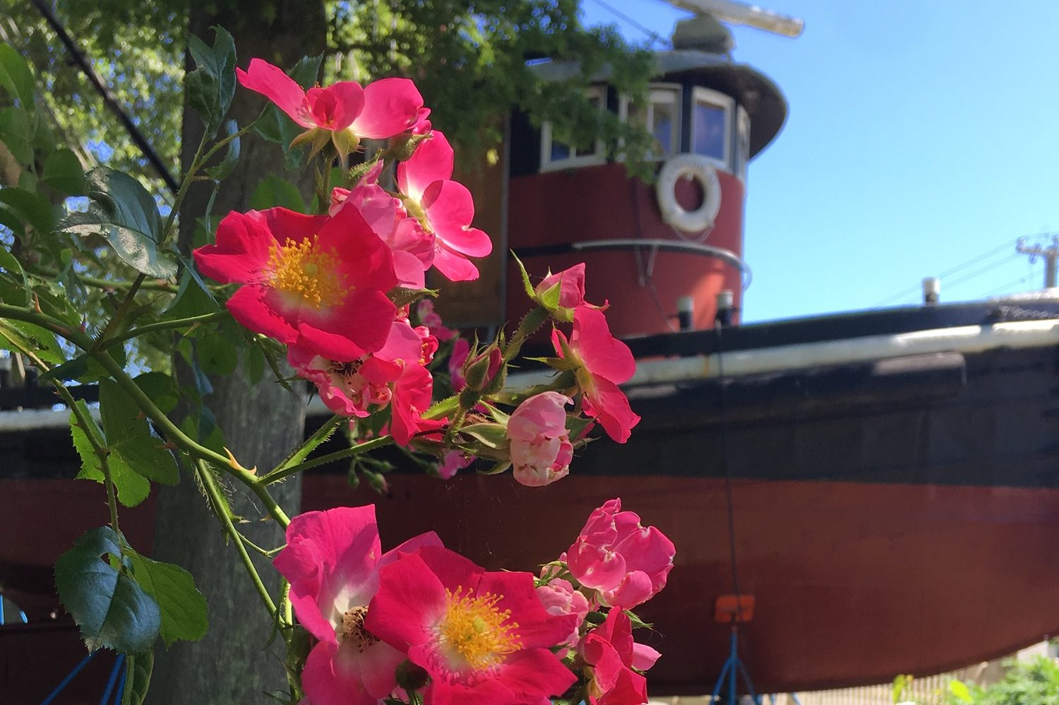 a tugboat at the mystic seaport museum with flowers in the foreground